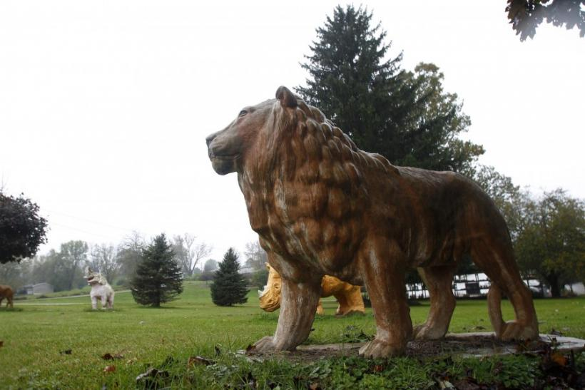 A statue of a lion sits in a yard near a property from where exotic animals escaped in Zanesville, Ohio October 19, 2011.