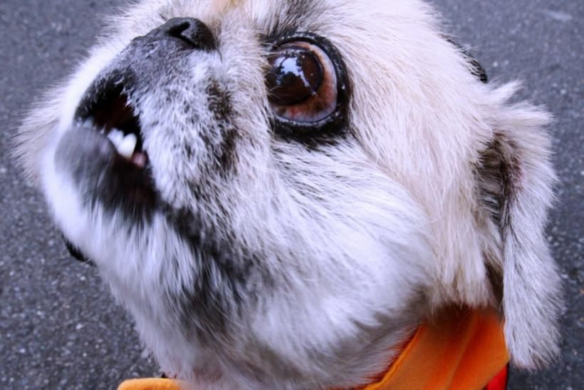 Heilongjiang Province to Enforce One-Dog-Per-Household Policy