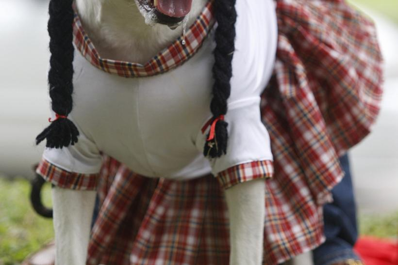 A dog dressed as woman participates in the Family Pet Festival in Cali