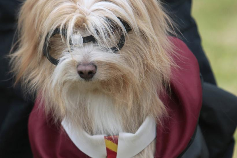 Best do it yourself halloween costumes for pets photos photo reutersjohn vizcaino harry potter costume solutioingenieria Choice Image