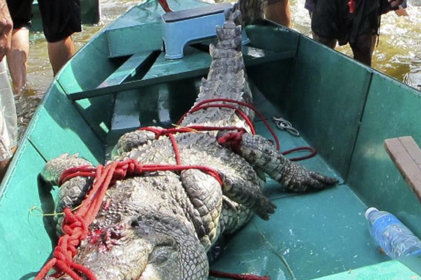 Hundreds of Crocodiles on the Loose in Bangkok's Suburbs [PHOTOS]