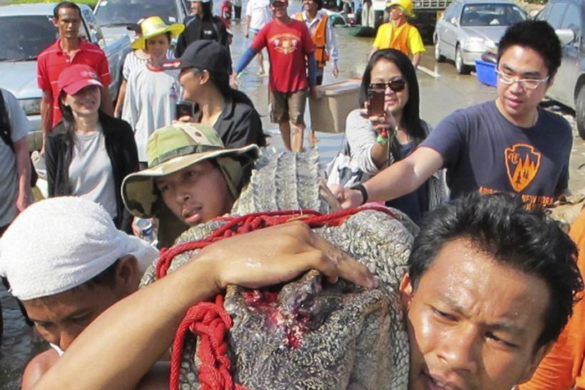 Hundreds of Crocodiles on the Loose in Bangkok's Suburbs (PHOTOS)