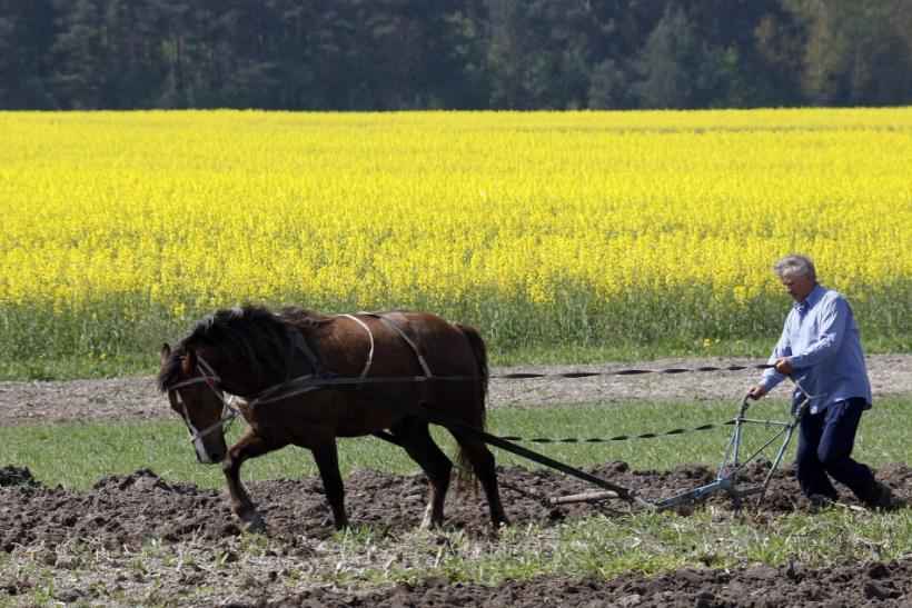 A man and a horse plough up a field