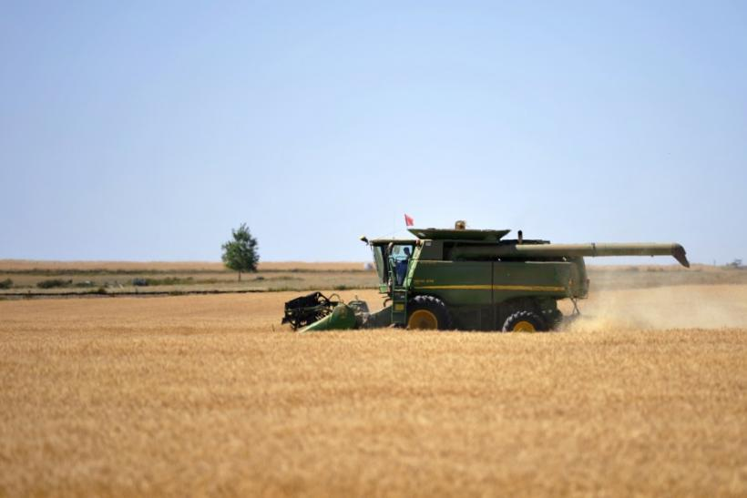 A farmer harvests his wheat crop on the Canadian prairies near Taber.