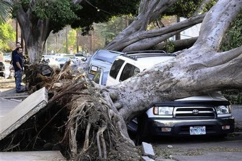 Local residents look at eucalyptus trees which fell on cars and blocked the street on Ave 57 after a heavy wind storm in the morning at Highland Park in Los Angeles, California