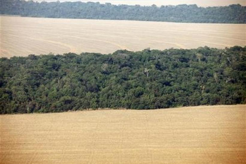 An aerial view of soy plantations flanking the Amazon forest in Mato Grosso September 8, 2011. Mato Grosso is the biggest grains-producing state in Brazil.