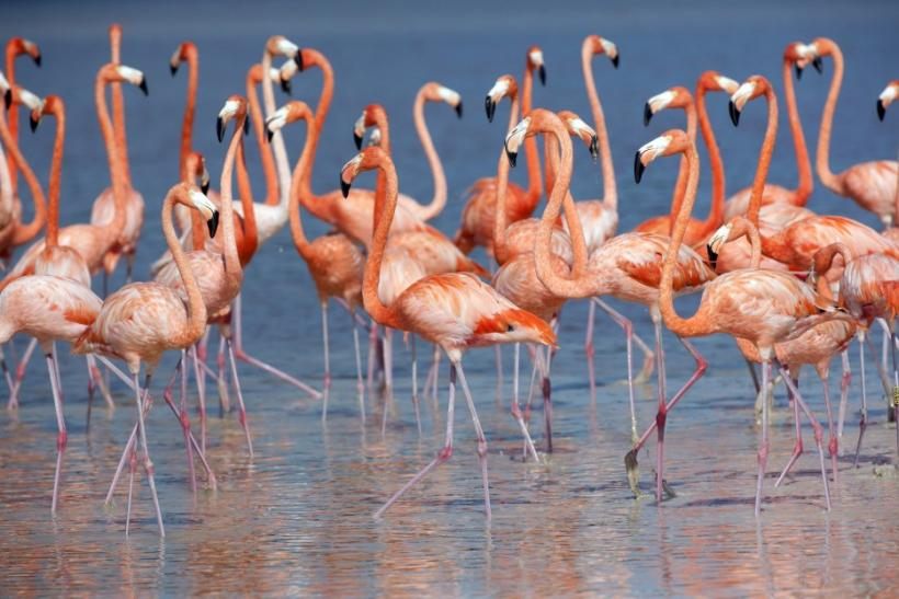 Flamingos stand in the waters of a wetland reserve in Celestun in Mexico's Yucatan Peninsula