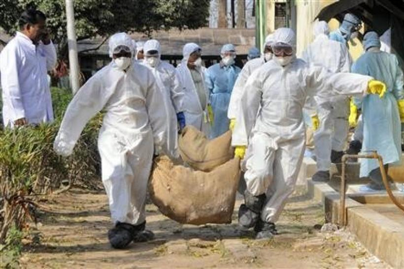 Health workers carry culled poultry for disposal at Gandhigram village, about 35 km (22 miles) west of Agartala, capital of India's northeastern state of Tripura, March 7, 2011.
