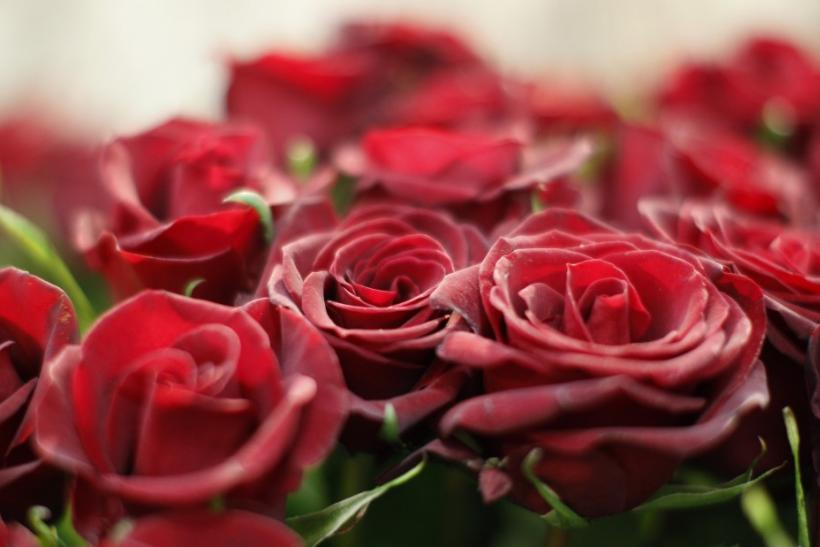 Photo: Reuters; Demand For Valentineu0027s Day Rose Soar In The US, 90 Percent  Imported