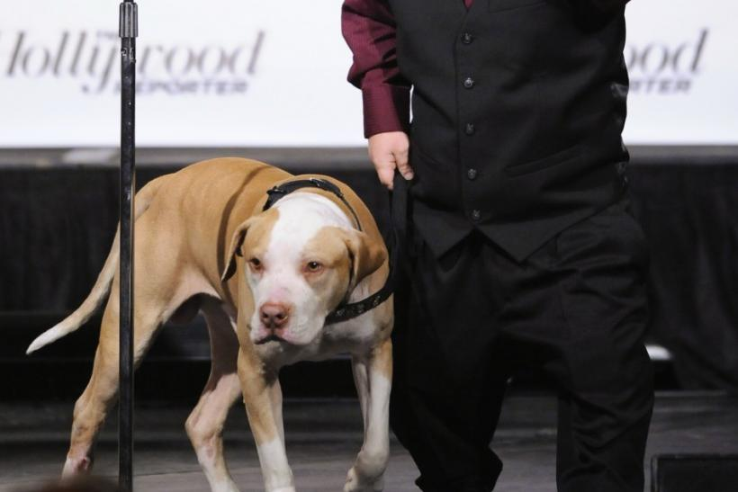 "Television personality Shorty Rossi and his dog Hercules except the award for ""Best dog in a Reality Television Series"" during the first annual Golden Collar Awards celebrating Hollywood's most talented canine thespians from Oscar nominated film"