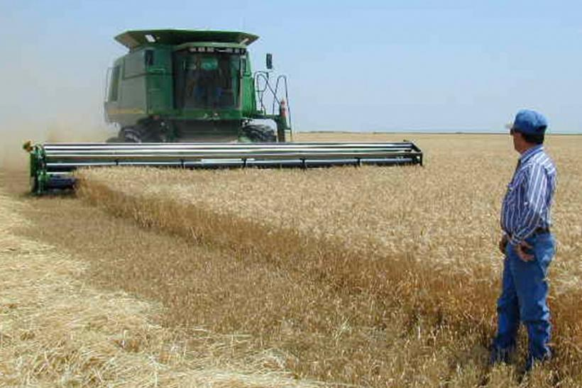 U.S. wheat farm