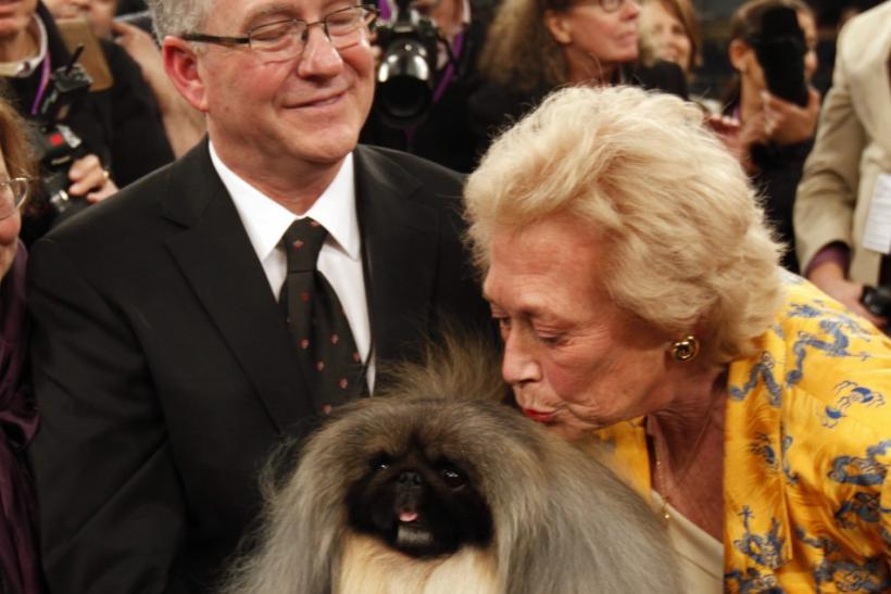 2012 Best in Show: Pekingese