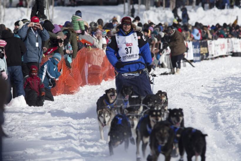 A maximum of 16 dogs are allowed per sled team
