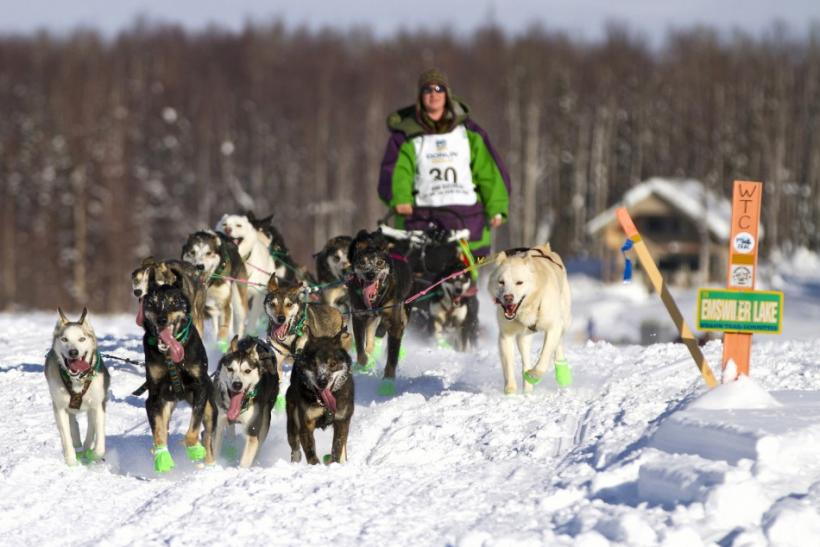 Kinzer of Willow and his team head to Nome during the 40th Iditarod Trail Sled Dog Race in Willow