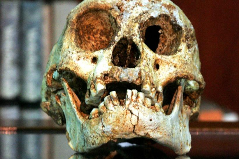 To be, or not to be? Scientists disagree about whether new fossils are evidence of a new type of human.