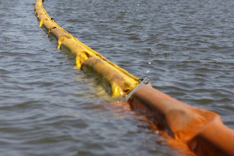 Oil absorbent boom protects marsh land from BP's Deepwater Horizon spill