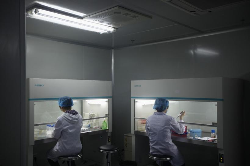 """Chinese scientists have cloned a genetically modified sheep containing a """"good"""" type of fat found naturally in nuts, seeds, fish and leafy greens that helps reduce the risk of heart attacks and cardiovascular disease."""