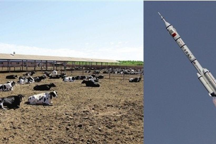 Dairy Cows and Rockets