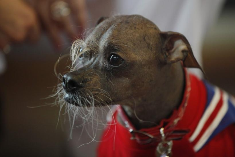 World's Ugliest Dog 2012: Mugly