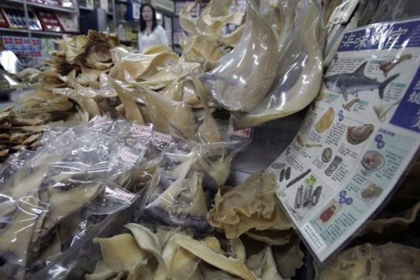 Dried Shark Fins In Taiwan