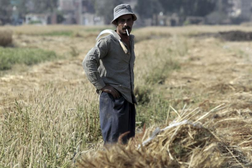 Egyptian Wheat Farmer