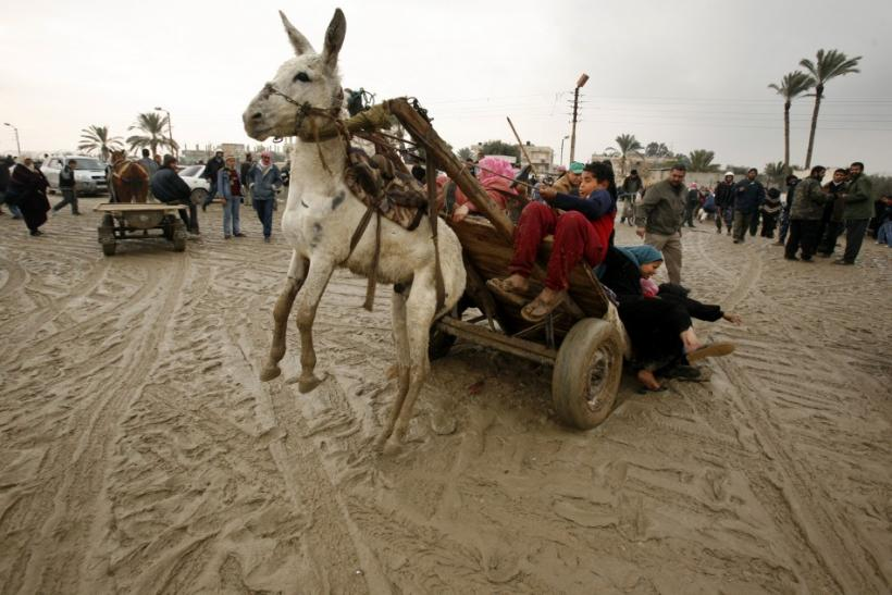 A Palestinian family falls from a donkey cart after they crossed a breach on the border wall between the Gaza Strip and Egypt