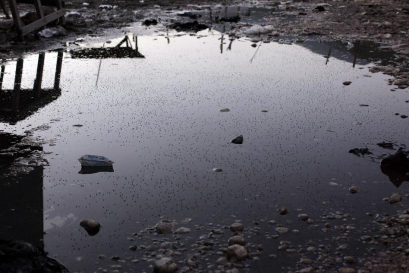 A puddle full of mosquitoes is seen in Jimani on the border between Dominican Republic and Haiti
