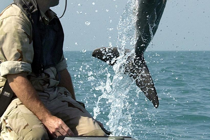 Military-trained Dolphins