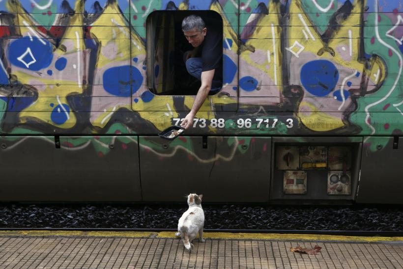 Greek railroad and cute kitty