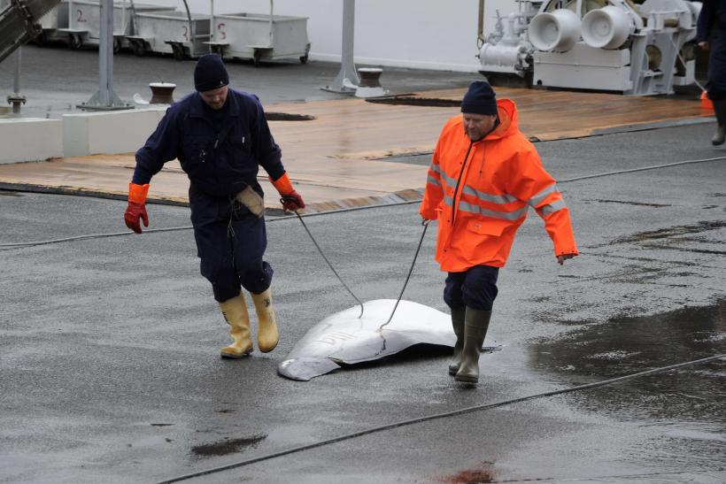 Commercial Whaling