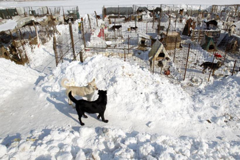 Dogs at shelter in Bucharest