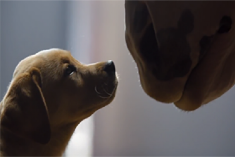 Super Bowl, Which Commercial Will You Remember? [VIDEO]