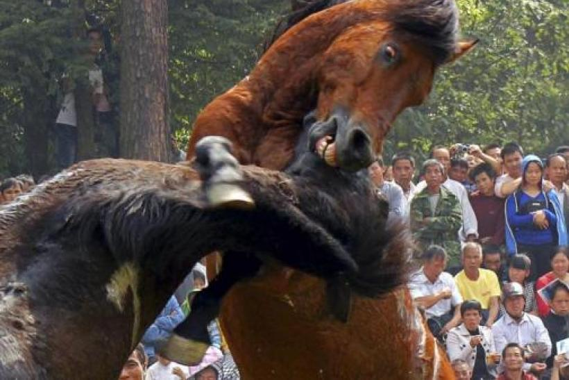 People watch horses fight during a traditional local event held by the Miao ethnic minority in Rongshui county, Liuzhou, Guangxi ethnic Zhuang autonomous region