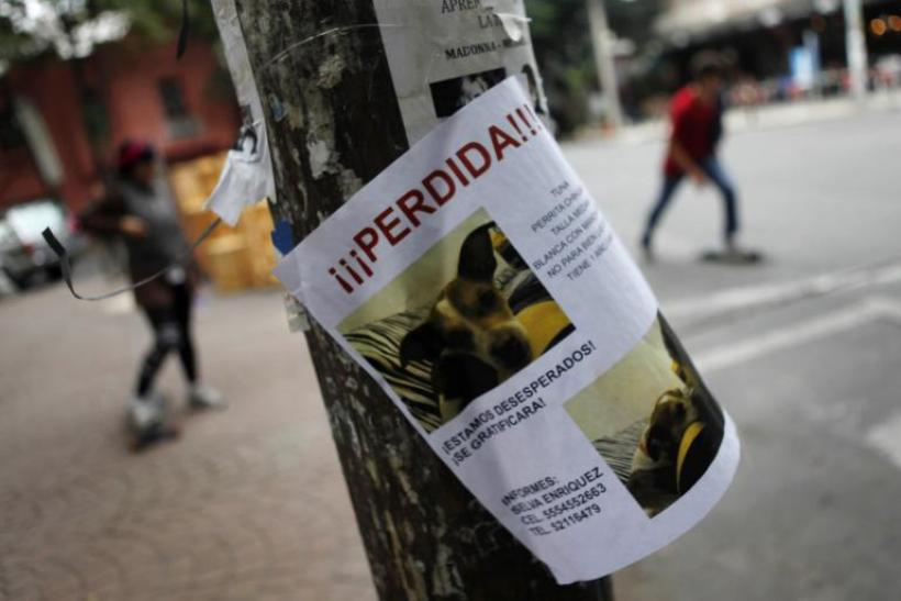 dog-kidnappings-mexico-city