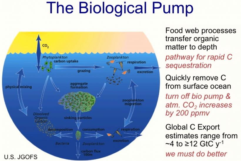 The_Biological_Pump_ENH