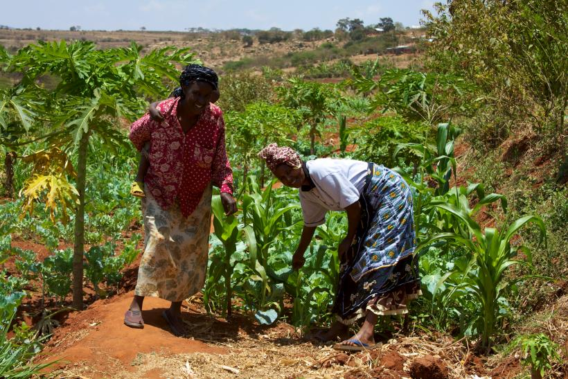 Women_smallholder_farmers_in_Kenya