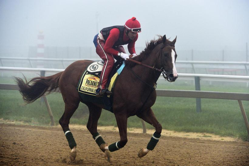 California Chrome 2014 Preakness