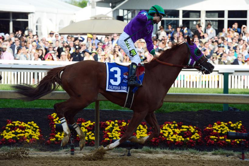 Cali Chrome 2014 Preakness