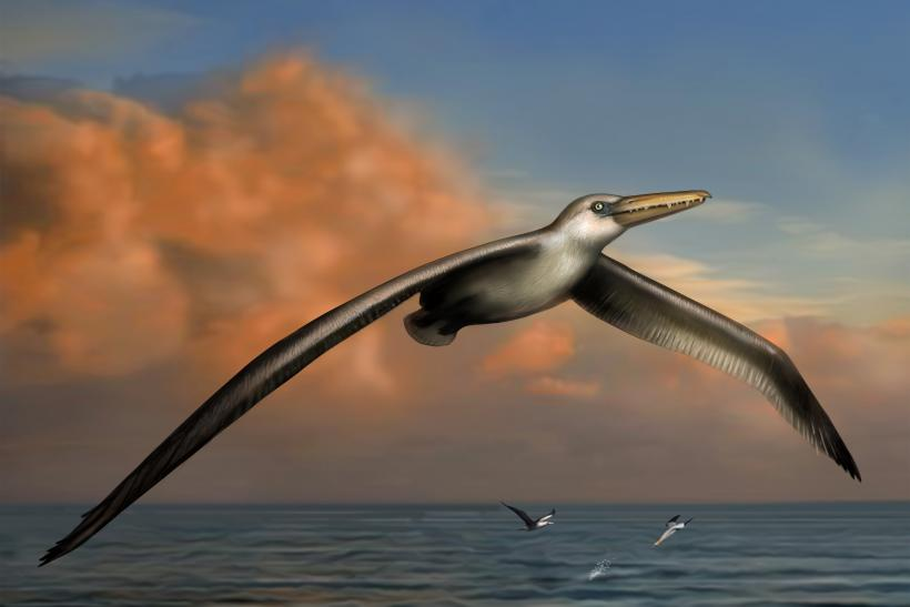 Largest-Flying-Bird