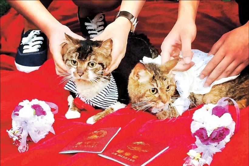 Shanghai Pet marriage