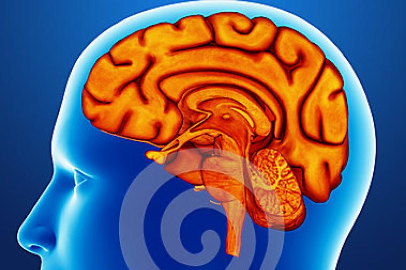 brain-detail-illustration-human-36825769