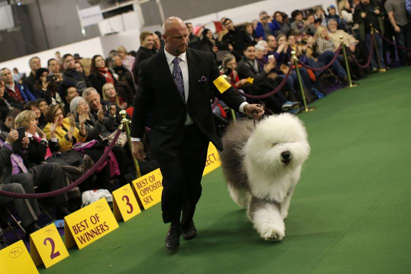 Welsh Kennel Club Dog Show  Results