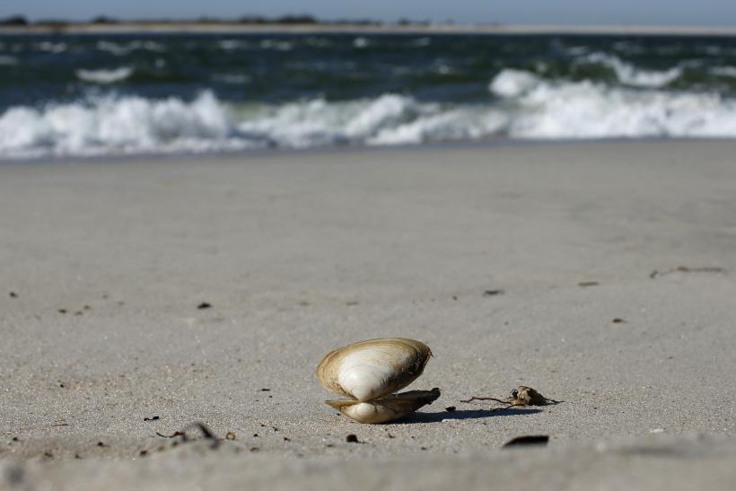Lonely Clam Shell