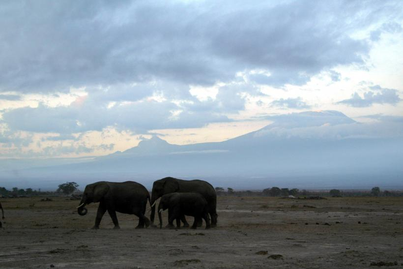 Africa Elephants Poachers, Anti-Poaching Groups