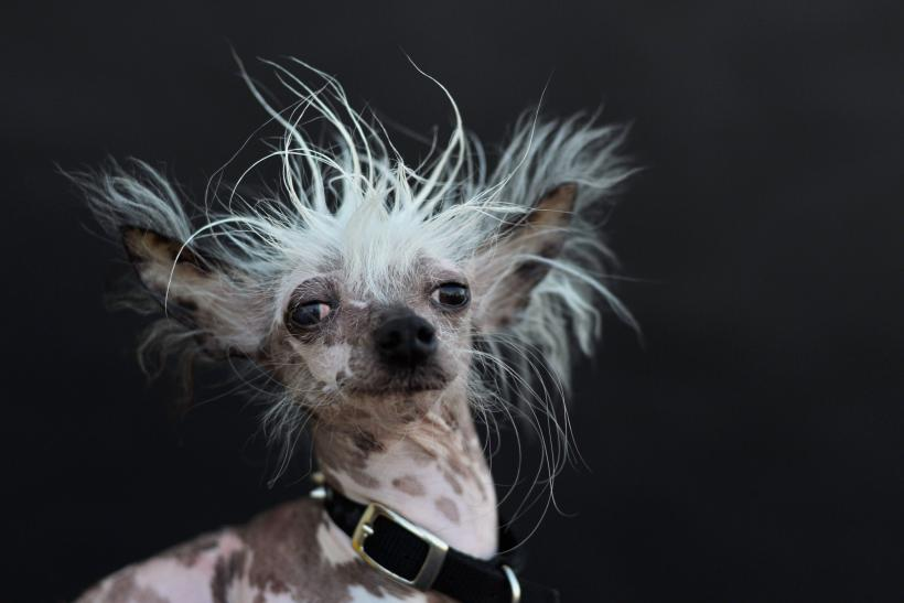 World's Ugliest Dog_2