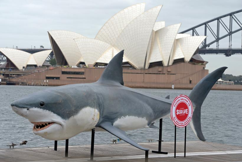 Shark killed Australia