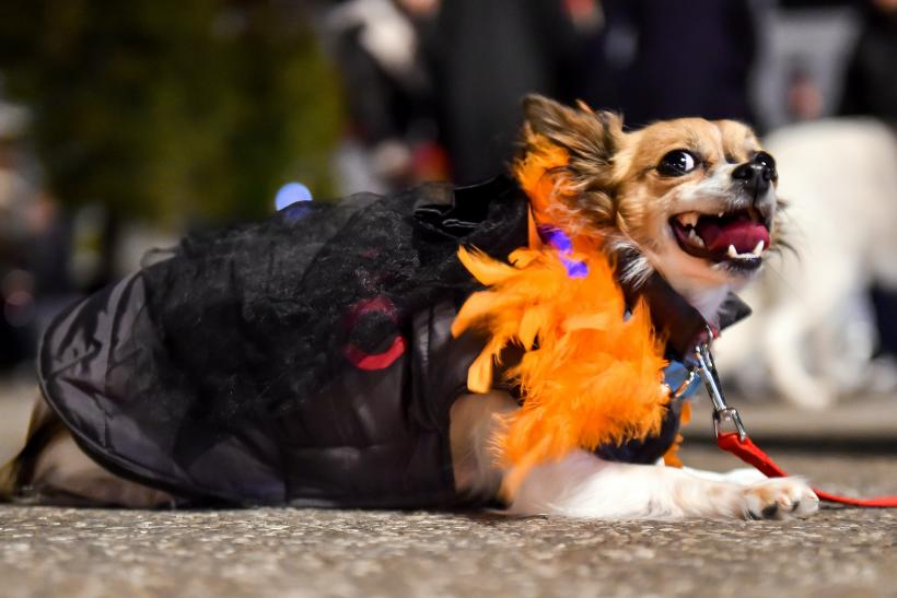 halloween costume ideas for pets 2015 how dogs cats owners can dress up for the holiday
