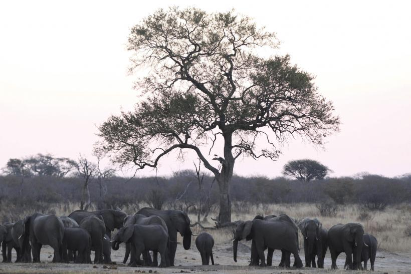 A herd of a elephants