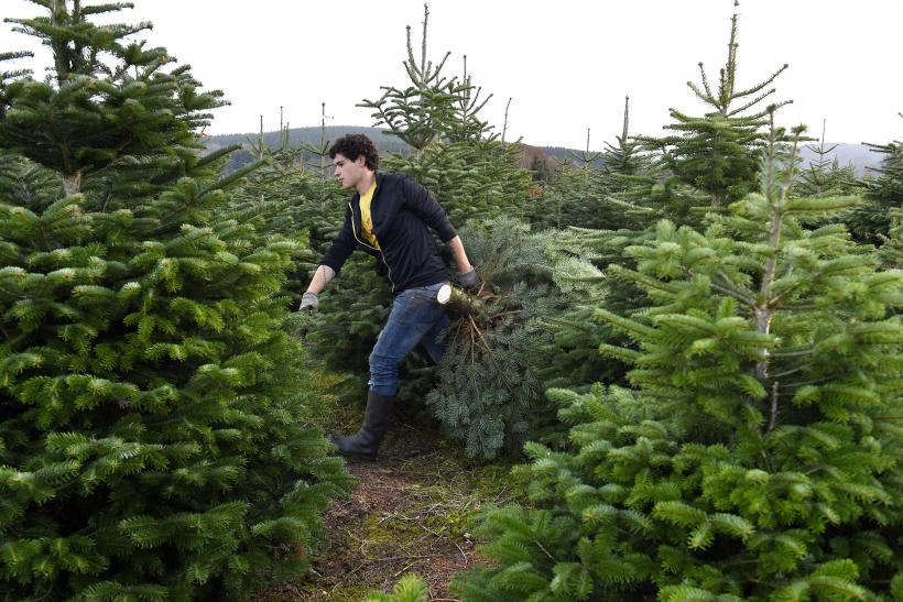 How To Buy A Real Christmas Tree: Purchase And Care Tips To Make ...