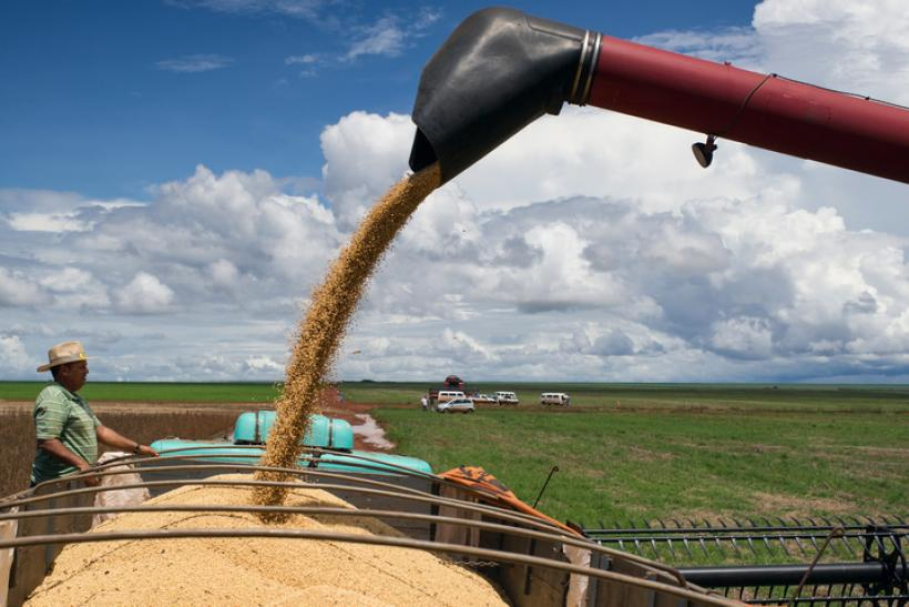 gettyimages-soybeans